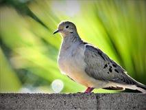 Vogel met verder palmen Royalty-vrije Stock Afbeelding
