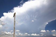 Vogel met wolk Stock Afbeelding
