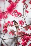 Vogel mit Blüte stockfotografie