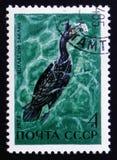 Vogel mit dem Aufschrift ` Bering-` s Cormoran `, von den Reihe ` Wasservögeln des UDSSR-`, circa 1972 Lizenzfreie Stockfotos