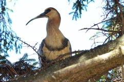 Vogel mit dem langen Schnabel auf einem Baum Stockfotografie