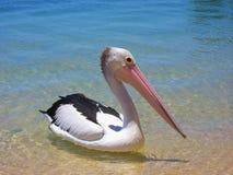 Vogel mit dem langen Schnabel lizenzfreie stockbilder