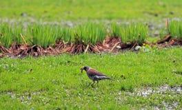 Vogel mit einem Fang Lizenzfreies Stockbild