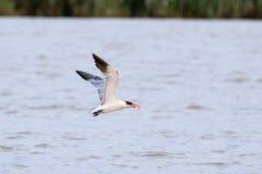 Vogel mit einem Fisch Stockfoto