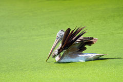 Vogel mit einem grünen See Lizenzfreies Stockfoto