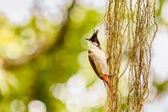 Vogel mit einer Krone im Kopf stockfotografie