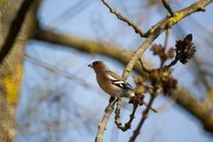 Vogel mit einer Wanze in seinem Schnabel Lizenzfreie Stockbilder