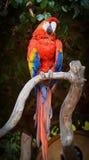 Vogel mit Farbe stockbild