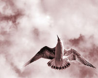 Vogel mit geöffneten Flügeln Lizenzfreies Stockfoto