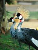 Vogel mit Krone Lizenzfreies Stockfoto