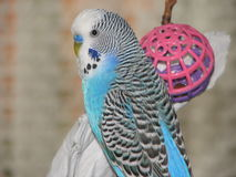 Vogel mit Spielzeug stockbilder