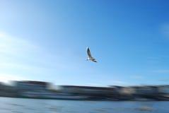 Vogel in motie royalty-vrije stock afbeeldingen