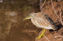 Vogel nahe Wasser Lizenzfreies Stockfoto