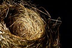 Vogel-Nest Stockfotografie