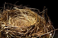 Vogel-Nest Stockfotografie