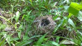 Vogel-Nest Lizenzfreies Stockfoto