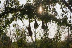 Vogel-Nest Lizenzfreie Stockbilder