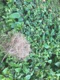Vogel-Nest stockbilder