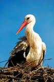 Vogel in nest stock foto
