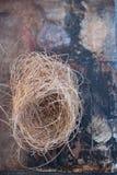 Vogel-Nest-Betrachtung lizenzfreies stockbild
