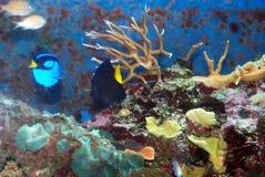 Vogel-Nest-Koralle Lizenzfreie Stockfotos