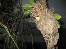 Vogel in nest met eieren Stock Foto