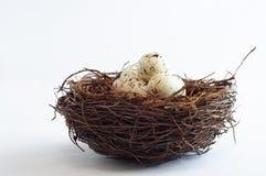 Vogel-Nest mit gesprenkelten Eiern Stockfoto