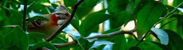 Vogel onder de bladeren van een boomtak Stock Fotografie