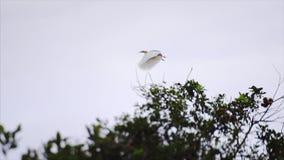 vogel op boombrunch stock videobeelden