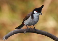Vogel op boomtak. 62-7 Stock Afbeeldingen