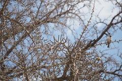 Vogel op de boom Stock Afbeeldingen