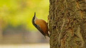 Vogel op de boom Stock Foto