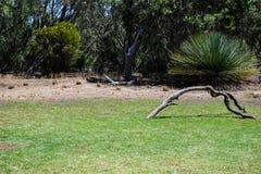 Vogel op de boom wordt neergestreken die Stock Foto
