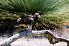 Vogel op de boom wordt neergestreken die Royalty-vrije Stock Foto's