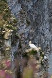 Vogel op de bovenkant van rots Stock Afbeeldingen