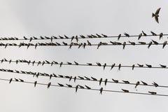 Vogel op de draad Stock Afbeeldingen