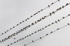 Vogel op de draad Royalty-vrije Stock Foto