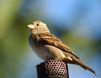 Vogel op de gastoorts stock afbeeldingen