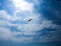 Vogel op de hemel Royalty-vrije Stock Afbeeldingen
