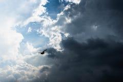 Vogel op de hemel royalty-vrije stock fotografie