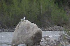 Vogel op de kust Stock Foto