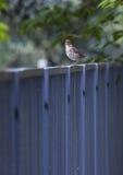 Vogel op de Omheining Royalty-vrije Stock Foto's
