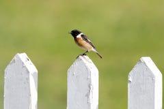 Vogel op de Omheining Royalty-vrije Stock Afbeelding