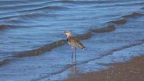 Vogel op de rivier stock videobeelden