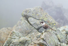 Vogel op de Rots Royalty-vrije Stock Fotografie