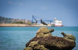 Vogel op de rotsen bij overzeese van de baaikust oceaan vissersbootachtergrond stock afbeeldingen