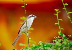 vogel op de struik stock afbeeldingen