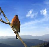 Vogel op de tak Royalty-vrije Stock Fotografie