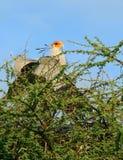 Vogel op de tak Stock Foto's