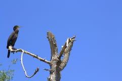 Vogel op droge boom Stock Afbeeldingen